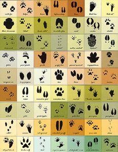 Magnetic Animal Tracks