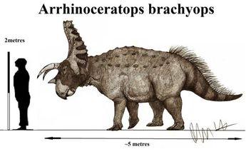 Arrhinoceratops brachyops by Teratophoneus