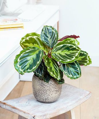10 shade plants for the darkest corners at home #corners #darkest #plants #shade
