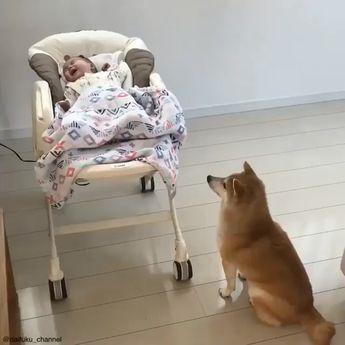 #animals #dog #animal #pet #dogs #pets #cute #nature #instagram #love #instagood #of #dogsofinstagram #photooftheday #petstagram #cat #puppy #petsagram #dogstagram #cats #instadog #doglover #adorable #dogoftheday #ilovemydog #instagramdogs #pup #lovedogs #lovepuppies #bhfyp