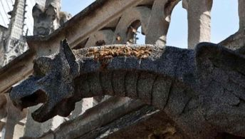 All 180,000 Honeybees Living On Top of Notre Dame Cathedral Have Survived the Fire