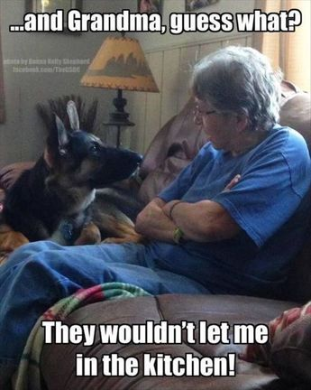 40 Funny Animal Pictures – Funnyfoto - Page 45