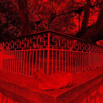 #greece #island #kos #treeofhippocatres #cat #iphonexr #vsco #red #photooftheday #instapic pins instag  #greece #island #kos #treeofhippocatres #cat #iphonexr #vsco #red #photooftheday #instapic #instagramers #ig_masters #igers #igdaily #instadaily