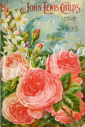 roses_flowers-01274 044-Rose ArtsCult.com Artscult ArtsCult vintage printable public domain 300 dpi commercial use 1800s 1700s 1900s Victorian Edwardian art clipart royalty free digital download picture collection pack paintings scan high qulity illustration old books pages supplies collage wall decoration ornaments Graphic engravings lithographs century 18th 17th Pictorial fabric transfer scrapbooking Paper craft instant masterpiece p