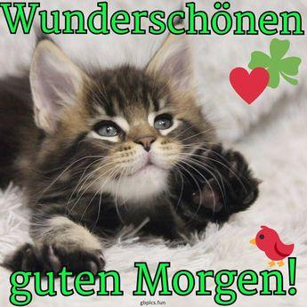 Erst Mittwoch Sprüche Gb Pics Gäste Pinterest Media Analytics