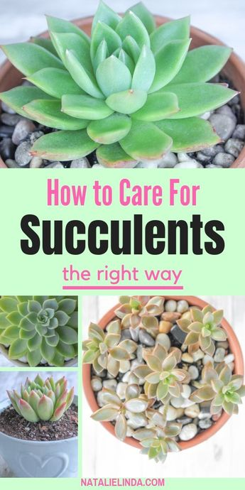 How to Properly Care for Succulents so They Stay Happy and Healthy