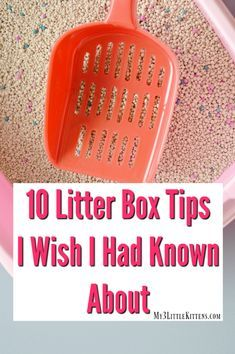 10 Litter Box Tips I Wish I Had Known About