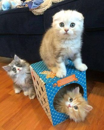 TOP 45 Cats and Kittens Pictures
