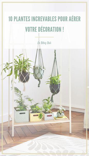 Plantes increvables : notre top 10, main verte ou pas