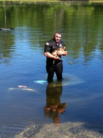 Officer rescues dog from submerged truck