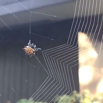 Little spider is busy in weaving a web please follow Animals Board for more videos