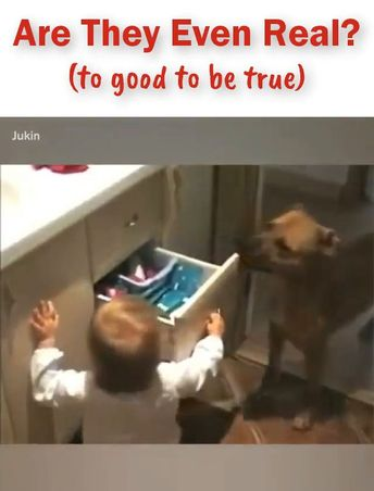 ^..^ Video – Those pets do the darndest things. Am I right?……