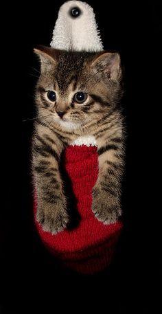2010 Stocking Cat 2 by Robert Morin