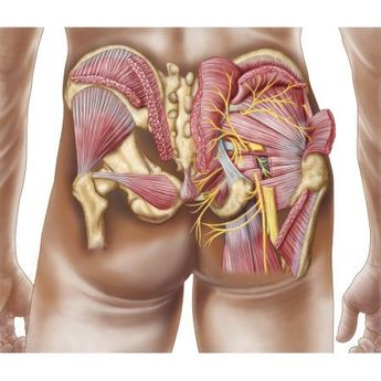 Anatomy of the gluteal muscles in the human buttocks Canvas Art - Stocktrek Images (31 x 27)