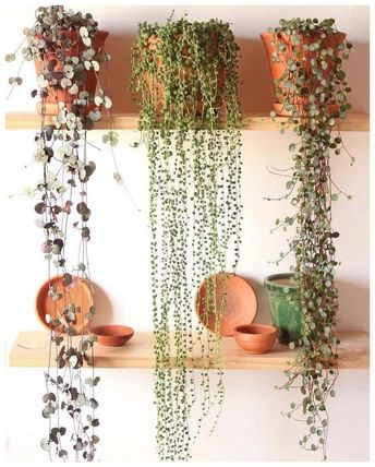 ✔ 65 friendly house plants for indoor decoration 51