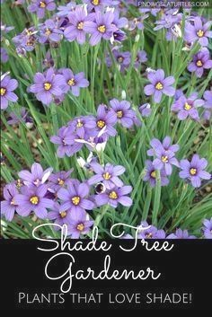 Today, I am going to talk about perennials that will not only thr ..