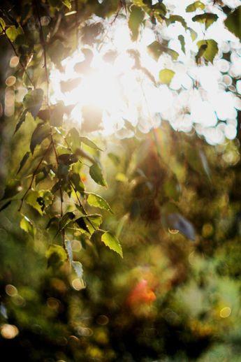 Світанок, який народжує світло [ST] #starlingworld #starling #stph #starlingphotography #starlingphoto #amazing #macroworld #sun #sunshine #warm #rad #l4l #likeitup #l4f #likeit #liketeam #ukraine #macro_vision