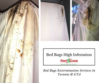 Pest Control Services In Gurgaon 9318366626