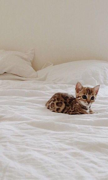 Tiny cat - big bed...