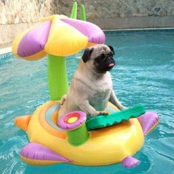 When you king of the pool