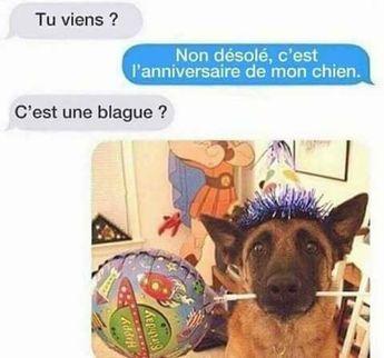 Tu viens ? non #désolé c'est l'#anniversaire de mon #chien ! c'est une #blague ? !!! #humour #blagues #blaguer #mdr #lol #rire #drole #rigoler #drôle