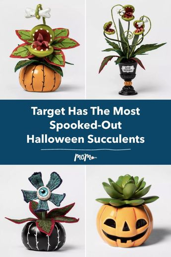 Target Just Dropped The Most Spooked-Out Halloween Succulents We've Ever Seen