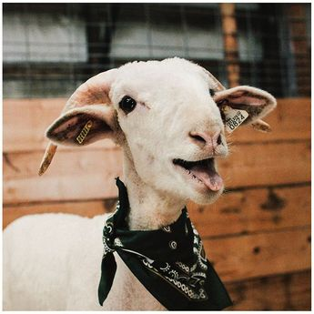 If CAM the Ram Jr. doesn't make you fall in love, we don't know what will.