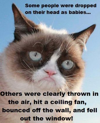 Details about Funny Cat Humor Grumpy Cat Oh, No I Offended You Refrigerator Magnet