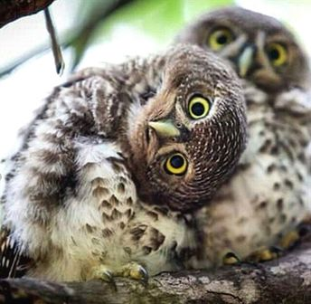 Are these owls or something else? #wildlife #animals #nature