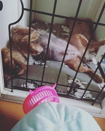 只今....停電中😰😰😰エアコン切れてハンディファンでcoco兄🐶過ごしてます😂😂😂いつ復旧するかなぁ~😰😰😰 家の中が暗い😂😂😂 皆さんもお気をつけ下さいねぇ~😌 #台風#dog#ワンコなしでは生きて行けません会 #停電中#ヨーキー #ヨークシャテリア#肺水腫からの日々 #心臓の薬💊治療 #愛犬