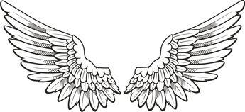 Wings opened