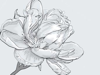 Digitally Painted Flower