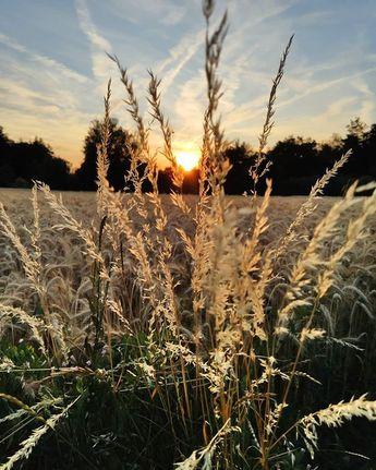 Leben ist das mit der Freude und den Farben ☀️ #farben #color #nofilter #sun #sunset #natur… – actinoid-pokes