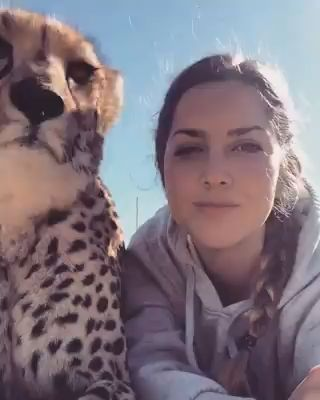 Lisa Kytosaho with one of the cheetah form the Western Cape Cheetah Conservation Program.