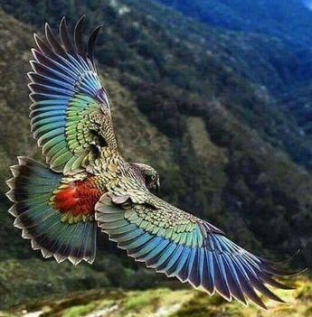 √ 50+ Jenis Burung Langka dan Unik Dilengkapi dengan Gambar Asli (Murai Batu,Cucak Ijo, Jalak Suren, dll)