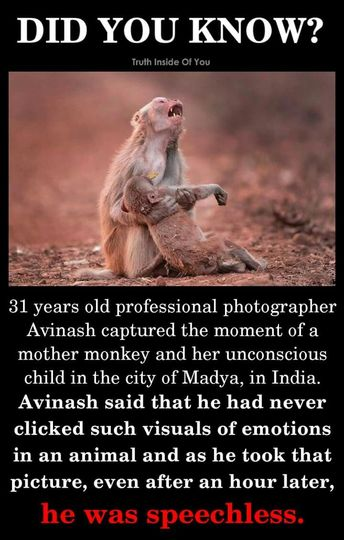 We all knew animals had feelings. We just choose to believe that they don't to continue using them as if they don't