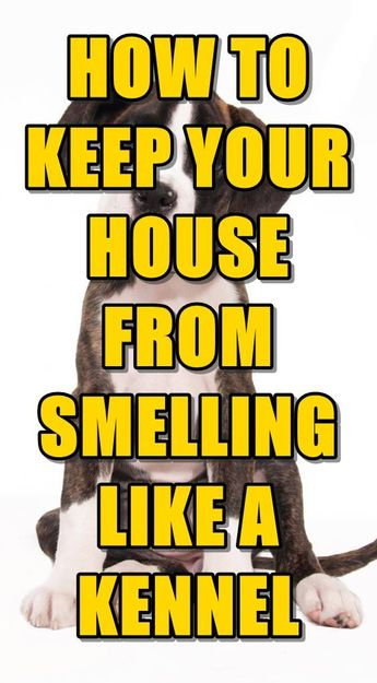 How to Remove Dog Smell From Your House