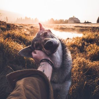 Man takes stunning photos of himself petting his dog wherever he goes