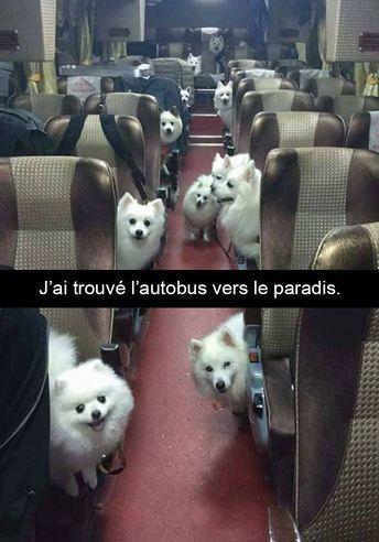 15 photos de chiens avec des sous-titres bien huilés - humour chien, humour ani... #memes #jokes #sillyjokes