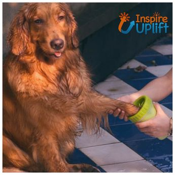 Pet Paw Cleaner #inspireuplift   The Safest and Most Effective Way To Clean Your Dogs Feet! Did you know that over 2 million people per year get sick from bacteria found on your dog's paws? The fact is each day your dog is walking through dirt, trash, urine, and feces. They then track these germs into your home, car, bed, and around your family. Never fear your adventurous pup's dirty paws again with the Pet Paw Cleaner! Now your best friend can have all the outdoor fun they want without trackin
