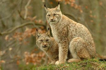 Wildpark Bad Mergentheim: Tiere sehen und erleben!