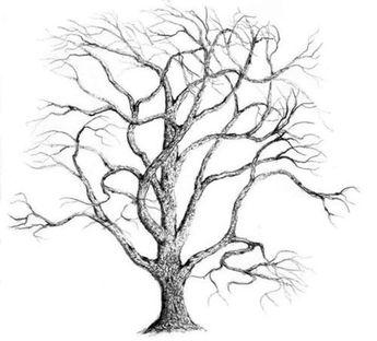 James Parker, Bare Oak