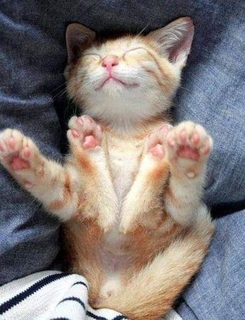 Hello kitty: