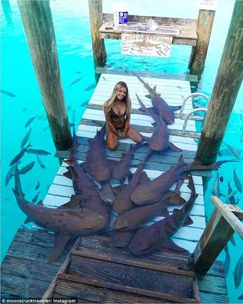 Law student who travels the world to take photos with sea creatures