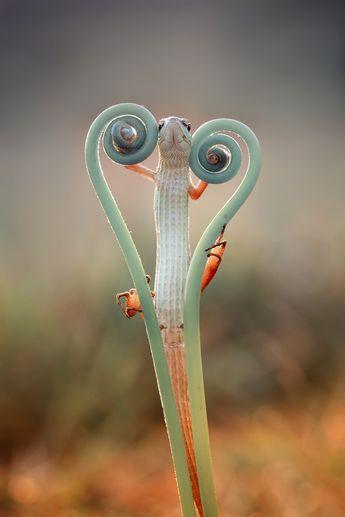 go4photos: love lizard by Hendy_Mp