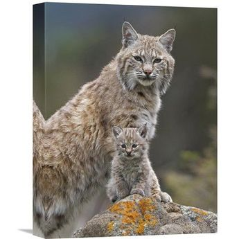 East Urban Home 'Bobcat Mother and Kitten, North America' Photographic Print on Canvas