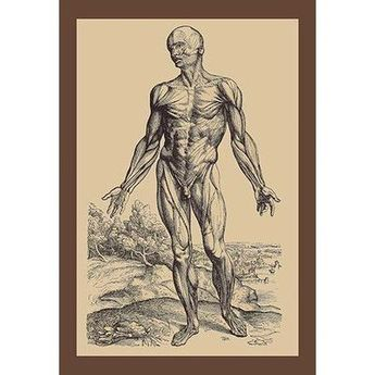 Buyenlarge The First Plate of the Muscles by Andreas Vesalius Painting Print