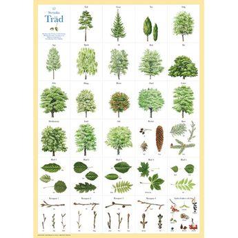 """En plansch med vackra och lärorika illustrationer. Artnamn står på svenska under varje bild. Perfekt att rama in som tavla eller använda i pedagogiskt syfte. Målningarna är hämtade från """"Första trädboken"""" som ni hittar i högermarginalen. Mått: 50x70cm"""