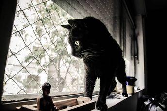 #tbt da janela preferida . . .  #cutecat #catsofinstagram #catoftheday #lovecat #catlovers #exploreworld #blackcat #gatopreto #animalplanet #instagrambrasil #mornings #gatosdeinstagram #ig_catclub #ig_cats #pet #lovemypet #gatosfofos #gateiros #gateirosdobrasil #gateirosadotantes #naocompreadote #gatosfobrasil #ig_saopaulo #instamood #ensaioanimal #animallovers #animalebras