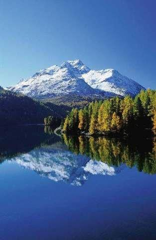 Silser See, Sils, Bündner Alpen, Larix decidua mill, Silsersee